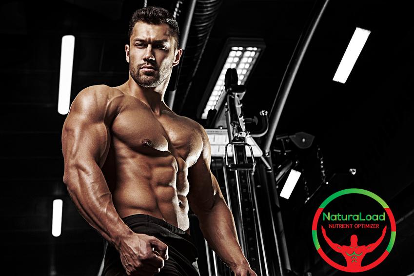 Anabolismo muscolare